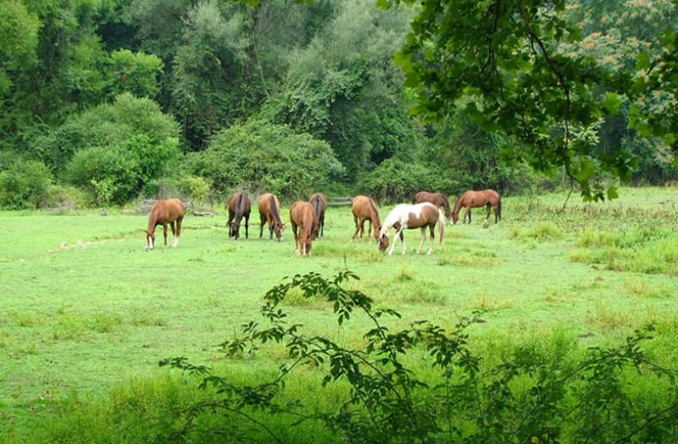 slide-horses